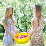 Strawberry pickers Stock Photography