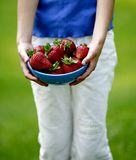 Strawberry picking. Fresh strawberries in a bowl after picking stock image