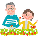 Strawberry picking. A senior couple enjoying strawberry picking royalty free illustration