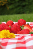 Strawberry picnic. Red checkered picnic blanket with ripe large strawberries beside dandelions on grass background Stock Photo
