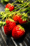 Strawberry plant. Close-up of strawberry plant in field stock image