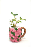 Strawberry Plant in A Strawberry Cup. A live strawberry plant in a mug covered in strawberries on a white background stock image
