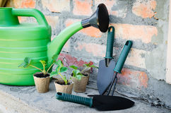 Strawberry Plants With Gardening Tools. Royalty Free Stock Images