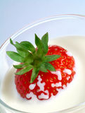 Strawberry plunging into glass of milk Stock Image
