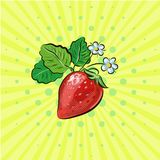 Strawberry pop art fruits vector illustration with flowers. Strawberry pop-art fruits vector illustration for design Stock Image