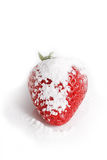 Strawberry in powdered sugar. Royalty Free Stock Images