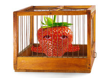 Strawberry, prisoner in the cage. Strawberry, prisoner in the cage made of wood with iron rods, isolated royalty free stock photography