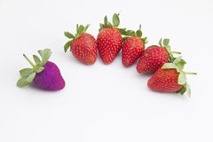 Strawberry in purple Stock Photography