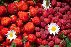 Strawberry and raspberry. And camomile on sun day Royalty Free Stock Images