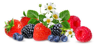 Strawberry,raspberry,blackberry, bilberry, blueberries isolated. On white background Stock Images