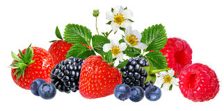 Strawberry,raspberry,blackberry, bilberry, blueberries isolated. On white background Royalty Free Stock Photography