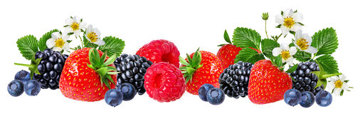 Strawberry,raspberry,blackberry, bilberry, blueberries isolated. On white background Royalty Free Stock Image