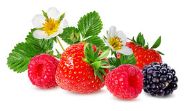Strawberry,raspberry,blackberry  isolated on white Stock Image