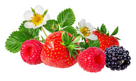 Strawberry,raspberry,blackberry  isolated on white Stock Photography