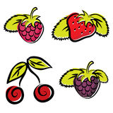 Strawberry, raspberry, cherry and blackberry Stock Photos