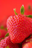 Strawberry on red background. Fresh strawberry on bright red background Royalty Free Stock Photography