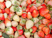 Strawberry red berry fruit are placed Stock Images