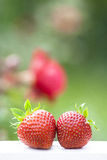 Strawberry. Red strawberry fruit close up Royalty Free Stock Image