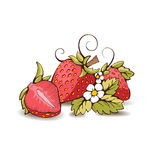 Strawberry. Red strawberry with yellow kernels, leaves, stalk, flowers and tendrils.  from the background. It can be used in packaging, postcard, label. A Stock Photography