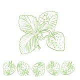 Strawberry retro-style sketch Stock Image