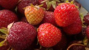 Strawberry Stock Photography
