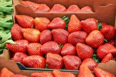 Strawberry ripe juicy closeup Royalty Free Stock Image