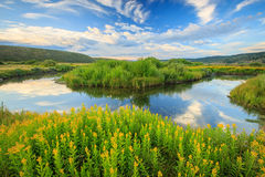 Strawberry River Stock Image