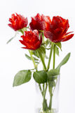 Strawberry roses in the vase 1. Strawberry flowers on white background isolated Royalty Free Stock Photo