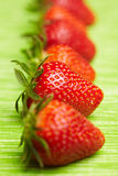 Strawberry row Royalty Free Stock Photos