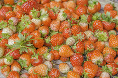 Strawberry on sale Royalty Free Stock Photography