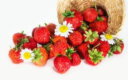 Strawberry scattered from basket Stock Photo