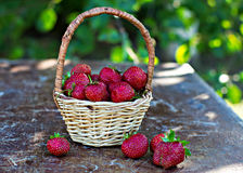 Strawberry is scattered out of the bucket. On the table Royalty Free Stock Photos