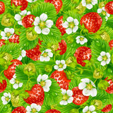 Strawberry seamless background. Vector red strawberry seamless background Royalty Free Stock Images