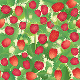 Strawberry  seamless pattern. Seamless strawberry field background on grass Royalty Free Stock Photos