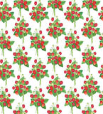 Strawberry  seamless pattern. Seamless strawberry field background on grass Stock Images