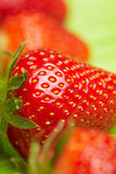 Strawberry seeds royalty free stock photography