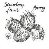Strawberry set hand drawn vector illustration sketch Royalty Free Stock Photos