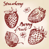 Strawberry set hand drawn vector illustration sketch Royalty Free Stock Photography