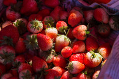 Strawberry with shadow and light shade for sale with under exposure Stock Photos