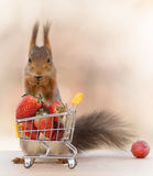 Strawberry shopping Stock Images