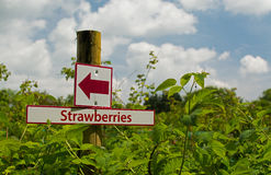 Strawberry Sign Post. A colourful sign post, pointing the way to strawberry fields Royalty Free Stock Image