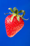 Strawberry single Royalty Free Stock Photography