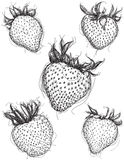 Strawberry sketches Royalty Free Stock Images