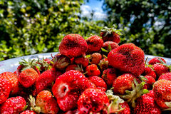Strawberry and sky. Ripe strawberry and slice of the blue sky Royalty Free Stock Image