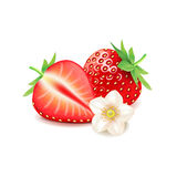 Strawberry and slice  on white vector Royalty Free Stock Photos