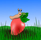Strawberry and Snail Royalty Free Stock Photography