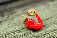 Strawberry, Snail, Tape Worm Stock Images