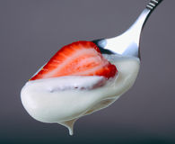Strawberry in sour cream Stock Image