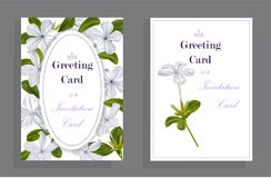 White flower on card royalty free stock photos