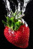 Strawberry splash. A ripe, red strawberry plunging into water Royalty Free Stock Images